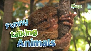 Download Funny Talking Animals Video