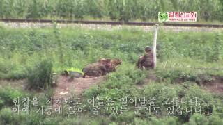 Download 북한의 지쳐 졸고있는 군인들.. Video