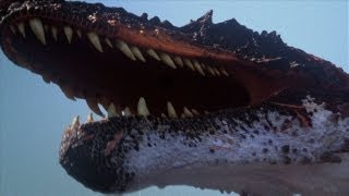 Download The BEST of Discovery's Dinosaurs Video