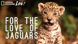 Download For the Love of Jaguars | Nat Geo Live Video