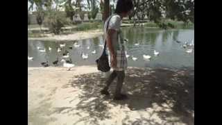Download Gary atrapando patos Video