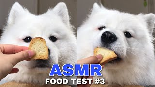 Download ASMR Dog Reviewing Different Types of Food #3 I MAYASMR Video