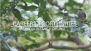 Download Career Opportunities of an Accountancy Degree Video