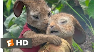 Download Peter Rabbit (2018) - Playing With Fire Scene (8/10) | Movieclips Video