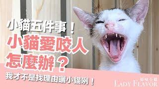 Download 小貓愛咬人怎麼辦?小貓最常見的五個問題!【好味貓知識】EP5 Video