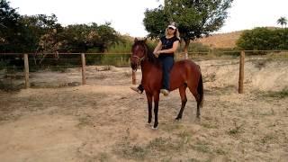 Download Como Ensinar o Cavalo a Recuar + Como Andar no Pelo Video
