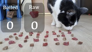 Download Raw or boiled meat? Which will the cat choose? Video