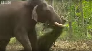 Download Elephants Hold Grudges? | Ultimate Killers | BBC Video