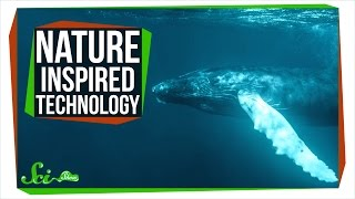 Download 8 Useful Technologies Inspired by Nature Video