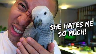 Download My Pet Bird Is Biting Me - correcting a biting parrot   Vlog #258 Video