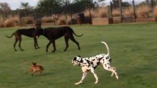 Download Tiny Dog vs. Dog Park Video