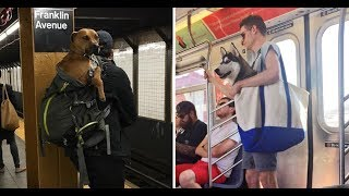 Download NYC Subway Bans Dogs Unless They Fit Into A Bag, And New Yorkers' Solution Is Hilariously Clever Video