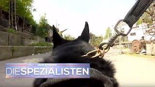 Download Polizeihund im Einsatz: Spürhund erschnüffelt Vermissten | Auf Streife - Die Spezialisten | SAT.1 TV Video