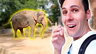 Download ANDIAMO ALLO ZOO! *animali nuovi* Video