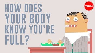 Download How does your body know you're full? - Hilary Coller Video