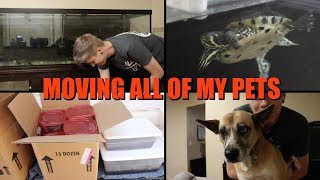 Download Moving My Pets to My New House! Video