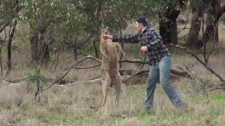 Download The Heartbreaking Reason Why The Man Who Punched A Kangaroo Was In The Outback Video