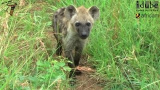 Download Visiting The Hyena Den Video