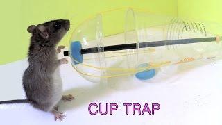 Download Disposable cup rat/mouse trap Video