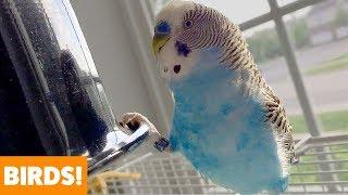 Download Cute Funny Birds   Funny Pet Videos Video