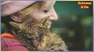 Download Elle prend dans ses bras un chat que personne ne voulait toucher, il la remercie de la plus ... Video