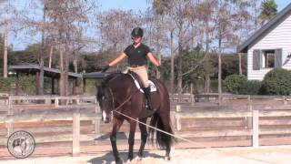 Download A Lunge Lesson Video