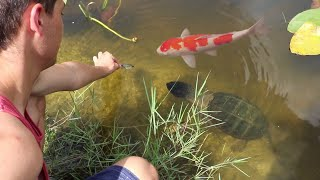 Download WILD PET FISH ARMY LOVES TO BE HAND FED!! Video