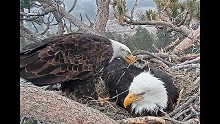 Download 3-11-19 Big Bear Eagles- Persistence Pays Off! Video