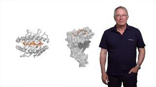 Download Hidde Ploegh (Boston Children's Hospital) 1: Immunology: The Basics of Antibody Diversity Video