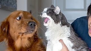 Download If you want to LAUGH HARD, WATCH FUNNY ANIMALS - Funny ANIMAL compilation Video