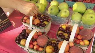 Download Farmers market lies exposed: hidden camera investigation (Marketplace) Video