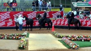 Download 60 Expointernacional Equina Feria de las Flores 2018 - Paso Fino Colombiano Video