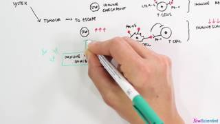 Download Immune checkpoint inhibitors Video