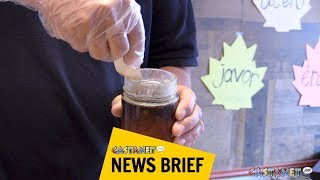 Download Maple syrup tapped from Okanagan trees Video