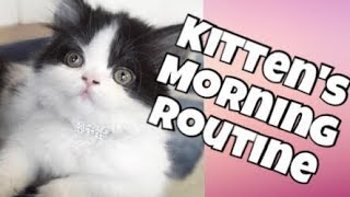 Download MY KITTEN'S MORNING ROUTINE Video