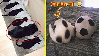 Download These Cats Can Beat You At Hide And Seek 😹 Video