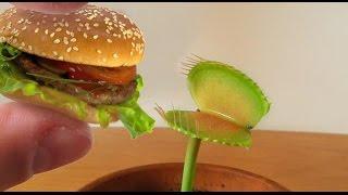 Download Charlie eating a MINI HAMBURGER! Video