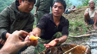Download Hallucinogen Honey Hunters - Hunting mad honey - documentary Video