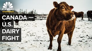 Download How Canada Helps Its Dairy Farmers (And Why Trump Hates It) Video