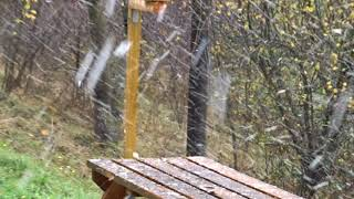 Download Chute de neige 05/11/2017 Saint-Nizier-du-Moucherotte Video