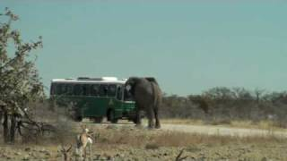 Download Elephant Charging Bus in Etosha National Park Namibie Video