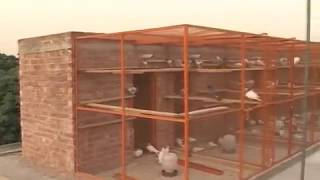 Download Kabutar Baazi - PKG by Tauseef Sabih Video