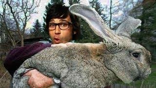 Download Bunny Wreaks Havoc at Kid's Park Video