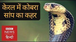 Download Kerala Floods: King Cobra Snakes become New Challenge (BBC Hindi) Video