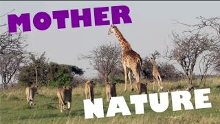 Download MOTHERS PROTECTING and SAVING their BABIES // Animal Compilation Video