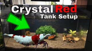 Download How To Setup A Planted Crystal Red Shrimp Breeding Tank Aquarium 🦐 Video