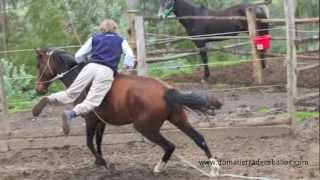 Download Doma de caballos.mov Video