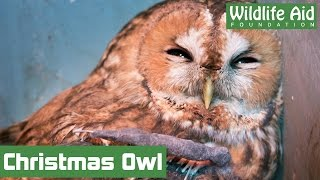 Download Two broken wings and one Christmas miracle Video