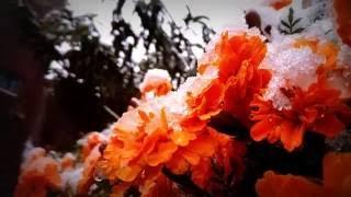 Download November Snow in Tokyo - [Japan Vlog] Video