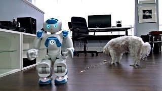 Download Robot + Dog + Pop-Tart = ? Video